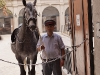 Konie w Hofburgu