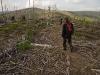 Uschnięty las pod Baranią Górą