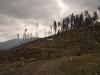 Powycinane drzewa na Hali Boraczej