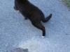 Ten kot posilał się upolowanym zaskrońcem