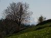 Wyżni Zarębek - widok na Tatry