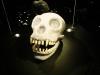 Amsterdam - diamentowa czaszka