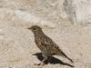 20 IX - ptaszek na Zawracie