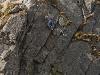 20 IX - Orla, drabinka na Koziej Przełęczy