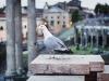Wielkanoc w Rzymie